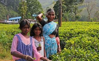 Ella Gap, een kloofdal omringd door theeplantages op Sri Lanka