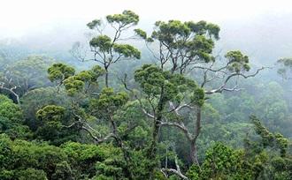 Bezoek het grote oerwoud, tropisch regenwoud van Sri Lanka