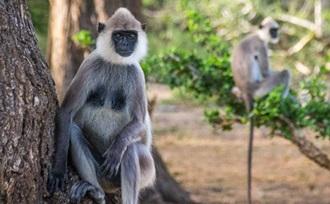 persoonlijk - advies - rondreis - Sri Lanka - natuurlijk - Galle