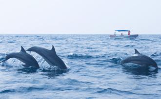 Dolfijnen spotten op Sri Lanka - Kalpitiya