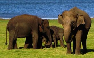 Beozek Udawalawe National Park op Sri Lanka tijdens uw natuurreis / rondreis door Sri Lanka.