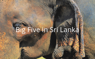 Big Five in Sri Lanka spotten