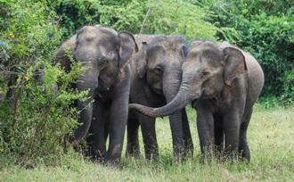 een tentsafari in Yala NP tijdens uw familiereis in Sri Lanka is een waar avontuur
