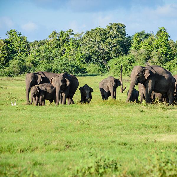 wat dacht u van een gezinsvakantie naar Sri Lanka