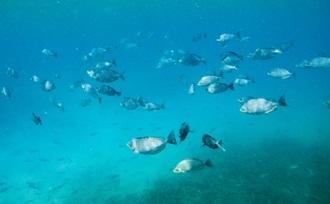 Sri Lanka Regisseur organiseert uw rondreis door Sri Lanka met snorkelen bij Pigeon Island