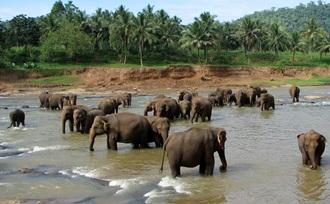 Het olifantenweeshuis in Pinnawala is een must tijdens een gezinsvakantie in Sri Lanka