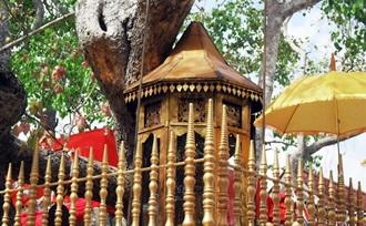 advies op maat over een familiereis met tieners naar Sri Lanka met fietstocht Anuradhapura
