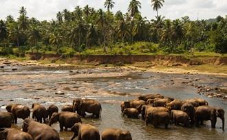 Sri Lanka Regisseur geeft advies op maat over rondreis met gezin met tieners naar Sri Lanka